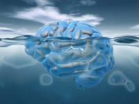 Neuromarketing – oder wie wir Ihre Marke gezielt mit Emotionen aufladen.